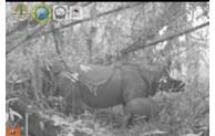 Two endangered Javan rhino calves spotted in Indonesia