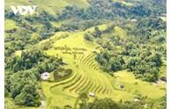 Golden season in Hoang Su Phi