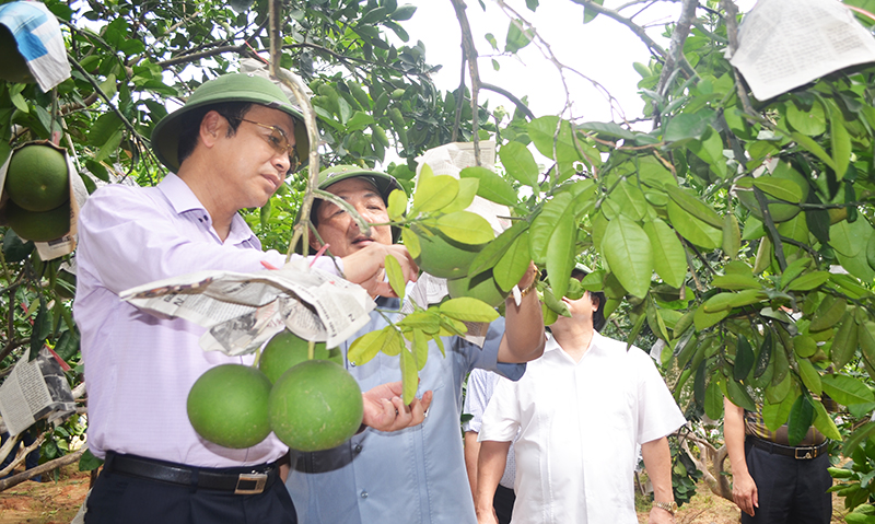 Quang Ninh intensifies implementation of Directive 05