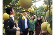 Hanoi's fruit area increases by 39%