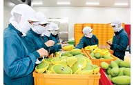 Country bags 2.5 billion USD from fruit, vegetable exports