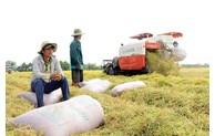 Belarus, Armenia import 10,000 tons of rice from Vietnam