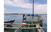 Vietnam striving to promote sustainable marine aquaculture development