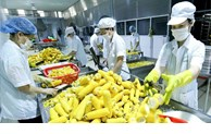Fruit, vegetable exports bag nearly 950 million USD in first quarter