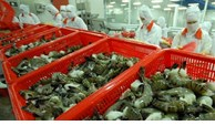 Vietnamese shrimp exports witness robust growth in FTA markets