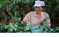 Transforming agriculture key to Asia and Pacific's future and survival