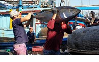 Seafood export hits 2.1 billion USD in 8 months