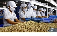 Vietnam's cashew nut market share in United States' total imports
