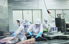 Tuna export to China sees threefold increase