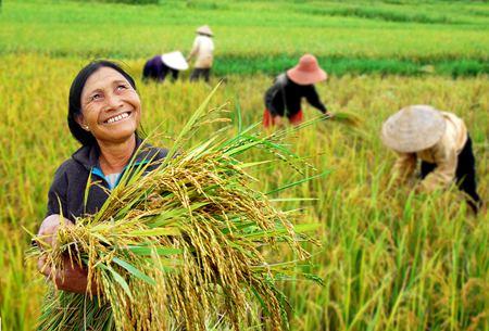 Développer la recherche du riz en Asie du Sud-Est