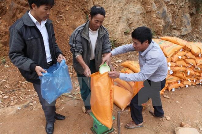Tet du Coq: plus de 14.000 tonnes de riz distribuées