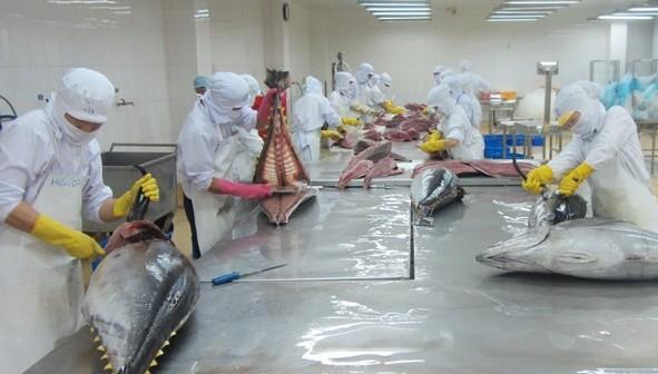 Les exportations nationales de thon retrouvent des couleurs