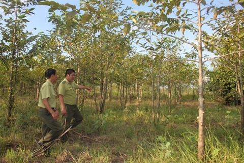 La surface forestière couvre près de 41,19% au Vietnam