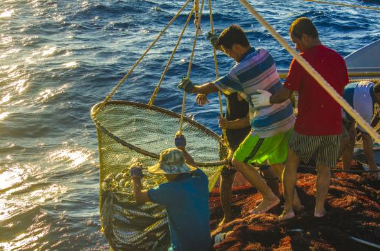 De nombreuses activités lors du festival culturel de la mer et des îles de Quang Ngai