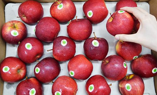 Les Vietnamiens friands de pommes françaises