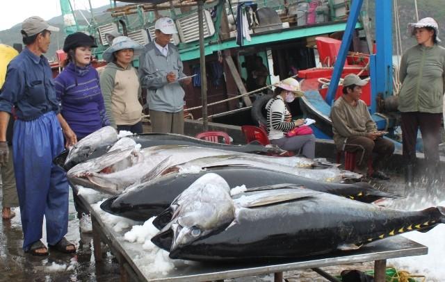 Forte progression des exportations de thon au Mexique