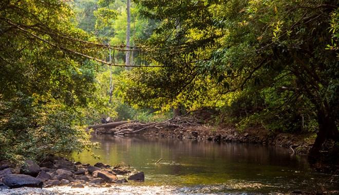 Protection des forêts: L'UE octroie au Cambodge 3,3 millions de dollars