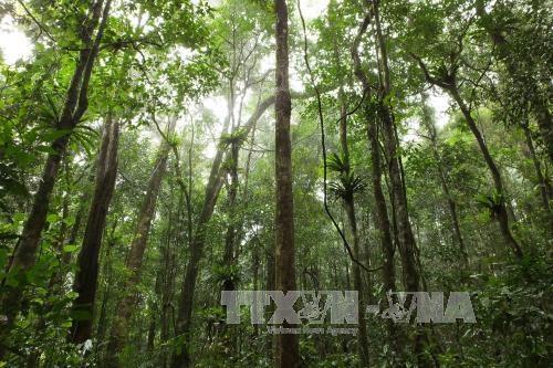 La région des Hauts plateaux du Centre veille à une gestion durable des forêts