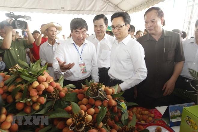 La fête des litchis de Thanh Ha s