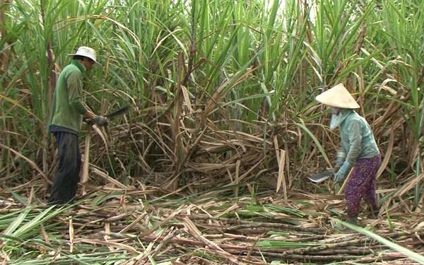 Exportation pour la première fois de sucre de canne du Vietnam aux Etats-Unis