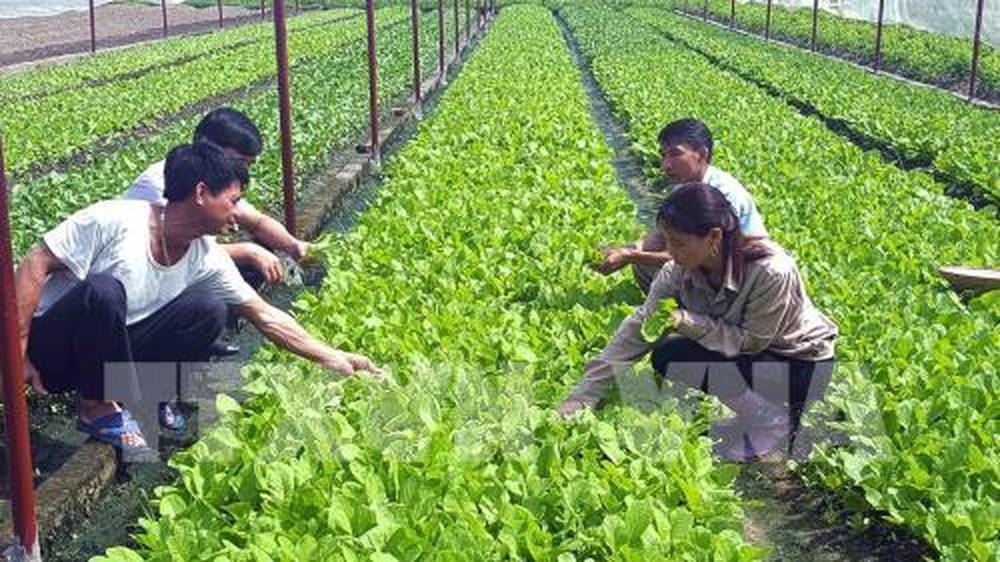 HCM-V: Plus de 400 nouvelles entreprises créées dans le secteur agricole