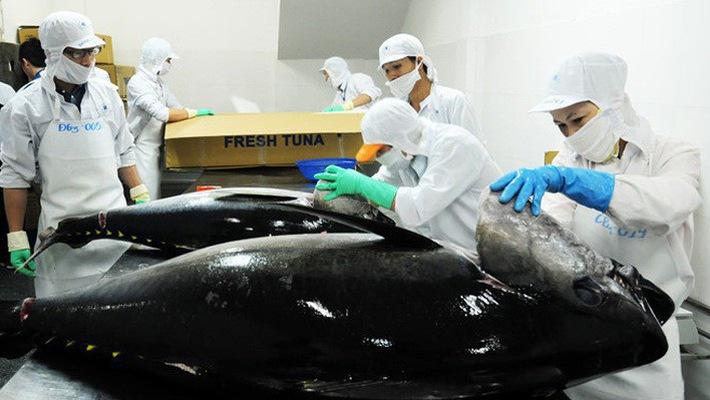 Les exportations nationales de thon devraient atteindre 500 millions de dollars en 2018