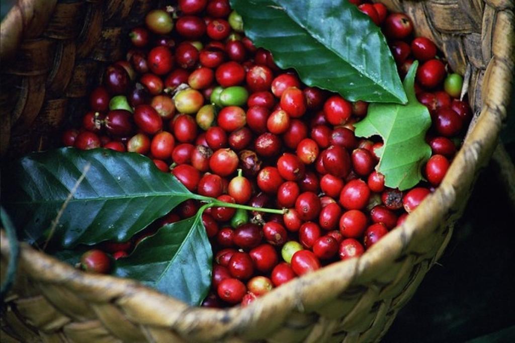 Hausse des exportations nationales de café en Algérie
