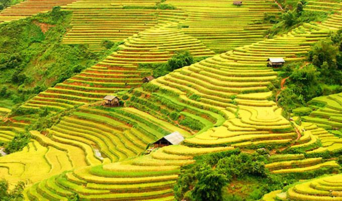 """Bientôt la Semaine du tourisme culturel """"À travers les champs en terrasses de Hoang Su Phi"""" à Ha Giang"""