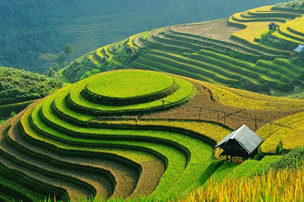 """Honorer la beauté """"La terre et l'homme de Hoang Su Phi"""""""