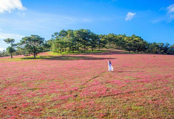 Dà Lat: Rendez-vous à la Fête des prés d'herbes roses 2018