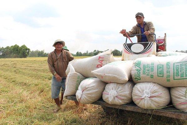 Les Philippines importeront 29.000 tonnes de riz du Vietnam