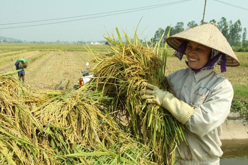 123.000 tonnes de riz seront exportées vers les Philippines