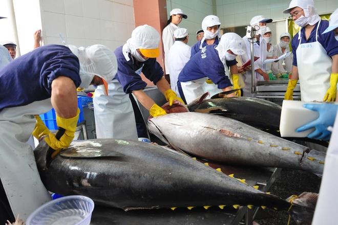 Bons résultats pour les exportations nationales de thon en 2018