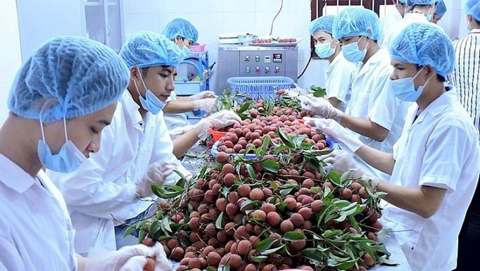 Le Japon, 1er partenaire commercial du Vietnam au sein du CPTPP