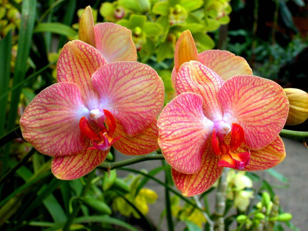 Hô Chi Minh-Ville : Bientôt le Festival des orchidées 2019