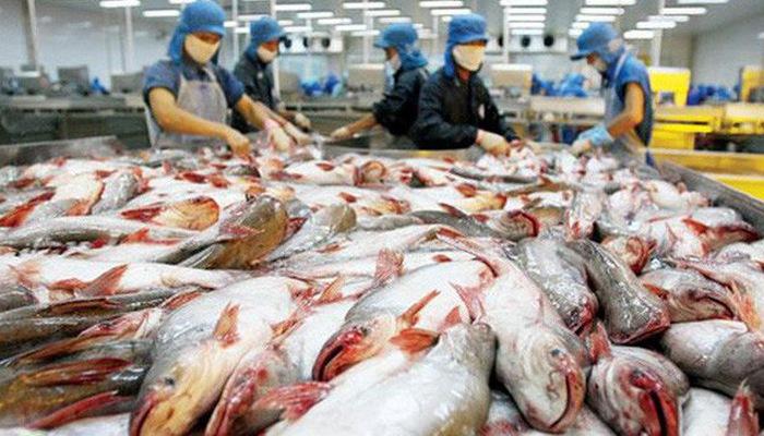 91% des poissons tra vietnamiens exportés vers les Etats-Unis