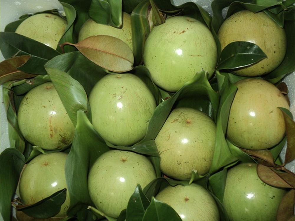 Forte hausse d'exportation de pommes de lait vers les Etats-Unis
