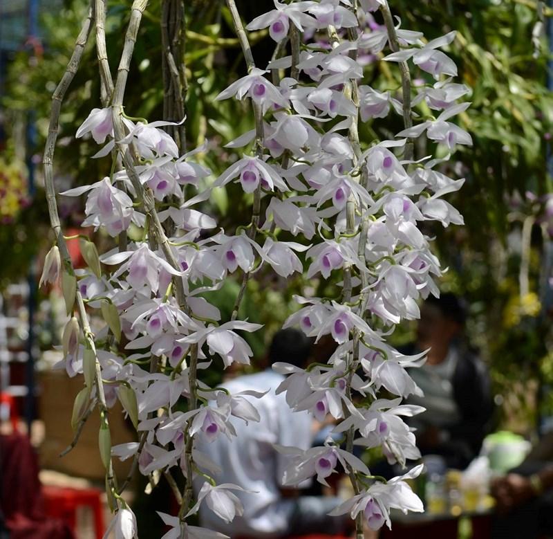 Festival des orchidées 2019 à Hô Chi Minh-Ville