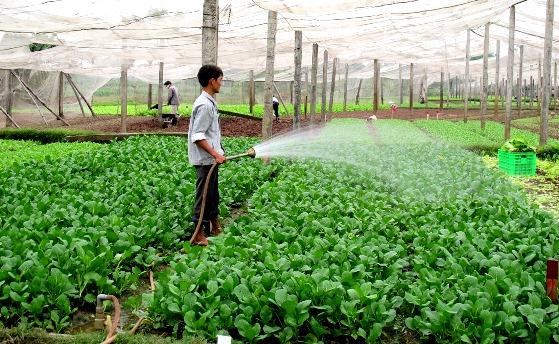 Le revenu des agriculteurs vietnamiens sera multiplié par 1,5 d'ici 2030