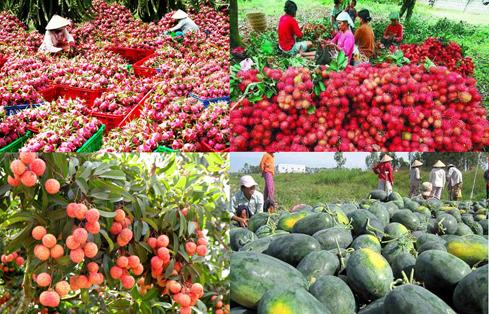 Le Vietnam vise 3,6 milliards de dollars d'exportation de fruits et légumes en 2020