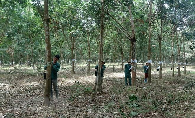 Le Vietnam investit dans 190 projets au Cambodge