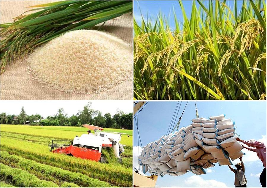 Exportations de riz: nécessité d'accorder la priorité à la transformation