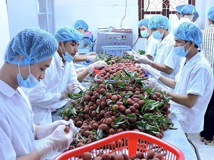 L'Australie, marché prometteur pour les exportations vietnamiennes