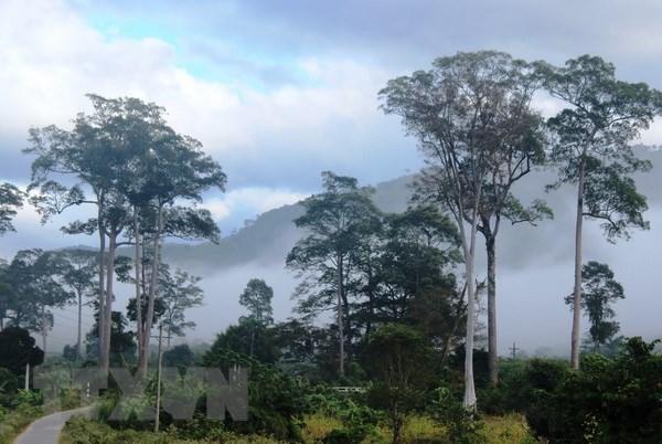 Efforts déployés pour préserver la biodiversité dans le parc national de Phuoc Binh