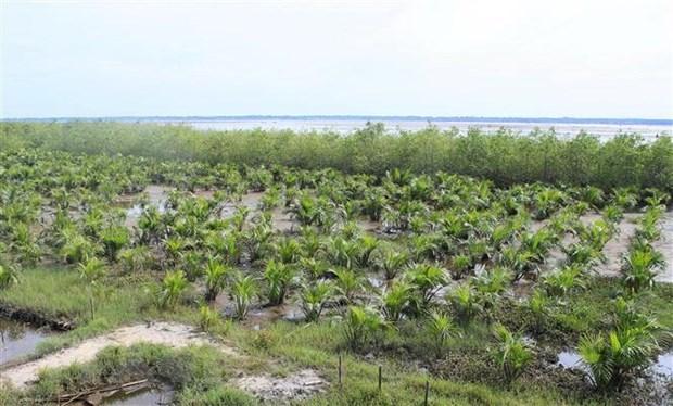 Le Vietnam se mobilise pour protéger la mangrove