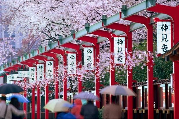 Le Vietnam en tête du tourisme entrant au Japon