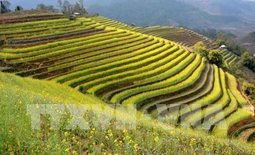 Diverses activités au Festival des champs en terrasse de Mu Cang Chai