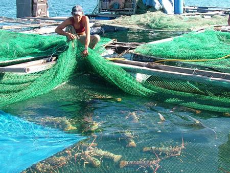 Aquaculture: un projet de 30 millions de dollars autorisé à Kiên Giang