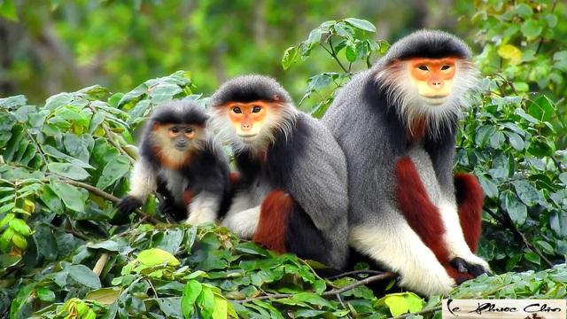 Projet pour renforcer les liens dans la conservation des espèces menacées