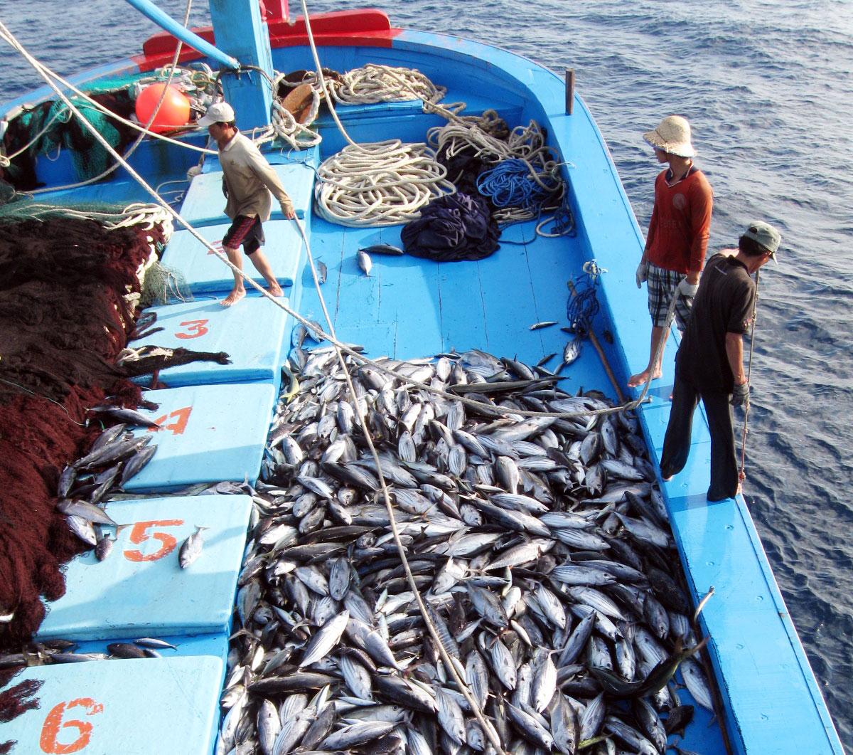 Pêche INN : Le Vietnam réalise efficacement les recommandations de l'UE